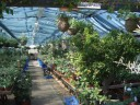 Ager Farm Nursery - one of the greenhouses