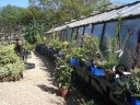 Ager Farm Nursery -more plants