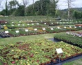 Tollslye Growers - Plant nursery view 4